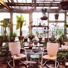 plant house / atrium / solarium / /