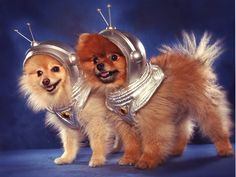 space jam pomeranian puppers