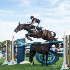Show Jumping Horses, Show Horses, Types Of Horses, English Riding, Equestrian Outfits, Horse Love, Horseback Riding, Horse Riding, Beautiful Horses