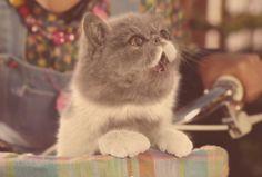5 anuncios protagonizados por gatos que no te dejarán indiferente por @Elsa Marques López Fernández. Vota en:  www.marketertop.com/otros/5-anuncios-protagonizados-por-gatos-que-no-te-dejaran-indiferente/