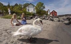Visit the beautiful island Merdø outside Arendal in Southern Norway Photo: Peder Austrud©Visit Sørlandet