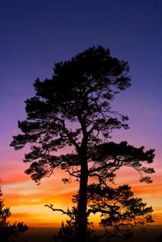 "Sunset Tree - Haughmond Hill, Shropshire, England - I love me an ""entire sky on fire""-esque sunset as much as anyone, but the kind in this shot really is my favorite. The changing of colors/shades from the bottom to the top is amazing, and honestly, this was isn't anywhere near the best I've seen."