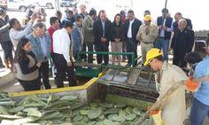 Abren la primera planta de biogás de nopal del mundo - Energia - Manufactura.mx
