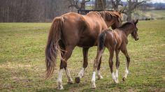Foals - 3 9 2016 10