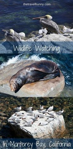 A Day in Monterey Bay catching the wildlife on a walk from Fisherman's Wharf to Cannery Row Best Vacations, Vacation Trips, Vacation Spots, Travel Inspiration, Travel Ideas, Travel Advice, Travel Tips, Travel Destinations, Travel Info
