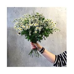 Bom dia meu povo feliz #vovosanta #mundovs #mundo #brasil #flower #top #stripe #pretoebranco #margarida #photooftheday #photo #instagram #vscocam #style #luxo #glamour Foto linda da @glamourparis ❤️❤️ (em Alto Rio Novo, Espirito Santo)
