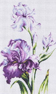 Thrilling Designing Your Own Cross Stitch Embroidery Patterns Ideas. Exhilarating Designing Your Own Cross Stitch Embroidery Patterns Ideas. Cross Stitch Kits, Cross Stitch Designs, Cross Stitch Patterns, Cross Stitch Embroidery, Embroidery Patterns, Hand Embroidery, Irises, Cross Stitch Flowers, Cross Stitching
