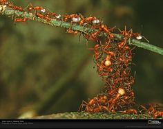 hard working ants - Bing Images