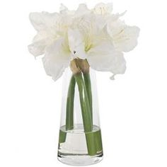 """Faux amaryllis arrangement in glass vase. Made in the USA.    Product: Faux floral arrangement     Construction Material: Fabric and acrylic with a glass vase    Color: White and green    Features: High quality and lifelikeLittle to no maintenance requiredCustom and made to order in the United States  Dimensions: 16"""" H x 10"""" Diameter    Note: This product is supplied by Natural Decorations, Inc.    Cleaning and Care: Use a damp cloth to wipe away dust"""