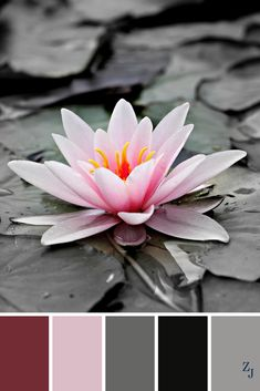 Nature Color Palette, Colour Pallette, Colour Schemes, Color Combos, Color Patterns, Gris Rose, Color Balance, Design Seeds, Colour Board