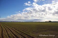 Nampa, Idaho field