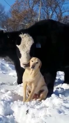 20 Ideas Funny Animals Friends Awesome For 2019 Cute Funny Animals, Cute Baby Animals, Funny Dogs, Farm Animals, Big Animals, Happy Animals, I Love Dogs, Cute Dogs, Animal Pictures