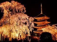 Kyoto japan.