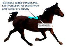 Views on Endurance Saddle Fitting