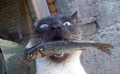 MY FISH MY LIFE