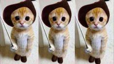 Cute Kitten Gif, Kittens Cutest, Cute Cats, Animal Cartoon Video, Baby Cartoon, Kittens Meowing, Grey Tabby Cats, Animals For Kids, Kitty