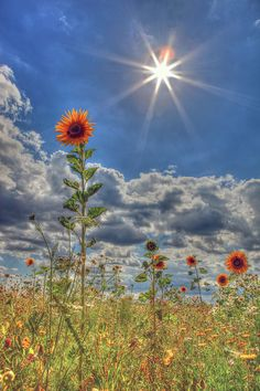 sunflowers in the sun Photography Projects, Landscape Photography, Nature Photography, Desktop Photos, Cool Photos, Beautiful Pictures, Summer Landscape, Unusual Art, Flowers Nature
