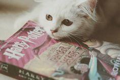 Book & Coffee:     Dois amores numa foto só!