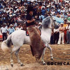 CABALLOS COLOMBIANOS: CABALLOS HISTORICOS DEL PASO FINO COLOMBIANO Horse World, Horse Breeds, Equestrian, Goats, Pony, Horses, Cool Stuff, Animals, Horse Stuff