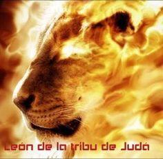 El león de la tribu de Judá