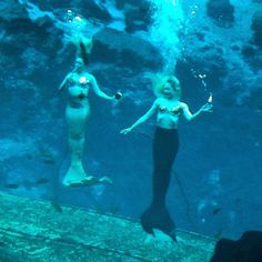 Weeki Wachee Springs is one of Florida's oldest attractions, bringing in people daily to see the mermaid shows.