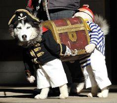 lol dog-pirate-with-treasure-costume