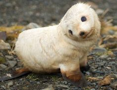 Oh this little guy Just a baby sea lion Land of cuteness‏ @landpsychology