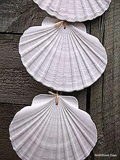 Beautiful Hanging Shells.