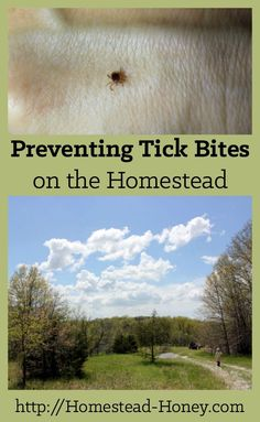 Are ticks a problem on your homestead? They used to be on ours, too. Until we starting implementing these three easy strategies for preventing tick bites. | Homestead Honey