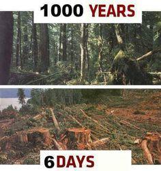 STOP KILLING TREES!!!!!!!!!!!
