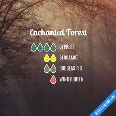 Enchanted Forest - Essential Oil Diffuser Blend