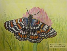 Art Contest Semifinalist, Grades 9-12: Bay checkerspot butterfly, Katrina Chen, Age 15, Troy High School