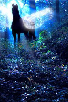 Pegasus - Sunlit revelations in a dark forest Unicorn Art, Magical Unicorn, Magical Creatures, Beautiful Creatures, Fairy Land, Fairy Tales, Fantasy World, Fantasy Art, Mythological Creatures