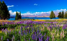 Wanderlust Lake Tekapo, New Zealand by Susan Blick on 500px #travel #newzealand