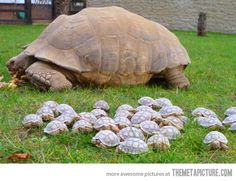 Turtles return to the mother ship…