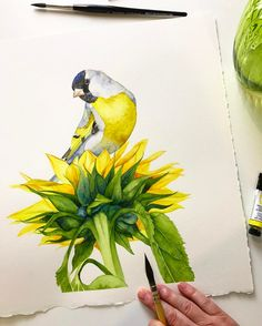 Here's my little Goldfinch perched on top of the sunflower  all done. I used Da Vinci brushes, Arches paper, Winsor and Newton and Daniel Smith watercolour paints. I hope you enjoyed the videos.