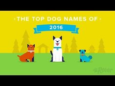 Top 100 Male and Female Dog Names by Breed, Gender, City and More