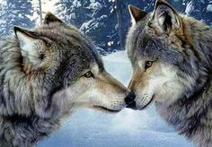 Animal Love Two Wolfs Women T-Shirt Tee S M L Xl 2Xl #ebay #Fashion