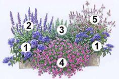 """Blumenkästen zum Nachpflanzen - Mein schöner Garten Blumenkasten zum Nachpflanzen: 1 Vanilleblume """"Nagano"""" (2 Stück), die üppige Blütenschirme bildet. 2 Balkonsalbei """"Farina Violet"""" blüht pausenlos und zieht Bienen und Schmetterlinge an. 3Rosmarin """"Abraxas"""" passt mit seiner würzigen Duftnote wunderbar zum süßen Vanillearoma des Arrangements. Im vorderen Bereich bildet das 4 Zauberglöckchen """"Calita Purple Star"""" einen tollen Blickfang Den Farbton greift die 5 Prachtkerze """"Gambit Rose"""" auf."""