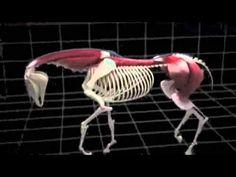Biomeccanica del cavallo.m4v - YouTube