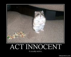 Act Innocent