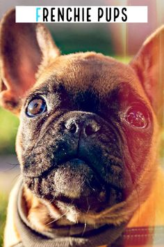 Muscle Body, He Day, Sports Activities, French Bulldog, French Bulldog Shedding, Bulldog Frances, Bulldog French, French Bulldogs