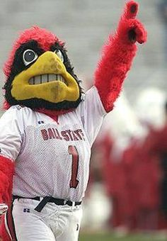 Ball State University Cardinals costumed mascot Charlie the Cardinal