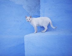 THE VIEW FROM FEZ: Chefchaouen