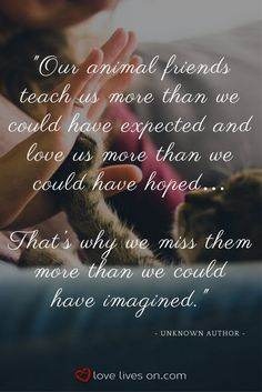 Love this sympathy quote for pet loss. Animals teach us so much about love and we mourn their loss just as fiercely. This quote would make the perfect addition to a sympathy card for someone grieving the loss of a beloved pet.