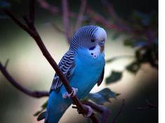 mavi kuşlar - Google'da Ara
