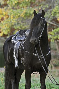 Learn more about We'd Love to Own horse Keegan J, and watch him perform in a liberty class.
