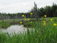 One of many old swamps.....