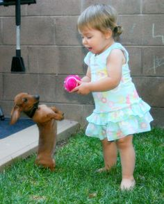If you love Dachshunds this cute, follow us @AnimalBehaviorC #doxielove