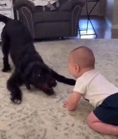 Cute Funny Baby Videos, Cute Funny Babies, Cute Baby Videos, Funny Kids, Cute Baby Dogs, Cute Dogs And Puppies, Doggies, Cute Animal Videos, Cute Animal Pictures